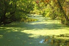 Grönt träsk på den Raritan kanalen Arkivfoton