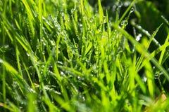 Grönt vät gräsbakgrund Arkivfoto