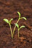 grönt växa ut plantor smutsa tre arkivbilder