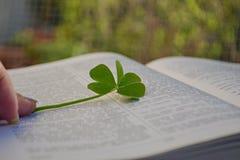 Grönt växt av släktet Trifoliumblad mellan öppna sidor i bok Arkivfoton