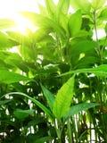 grönt växtbarn Arkivbild