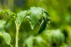 grönt växtbarn Royaltyfri Fotografi