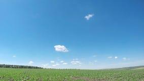 Grönt vårfält och små moln lager videofilmer