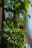 Grönt vårgräs med dagg som en bakgrund fotografering för bildbyråer