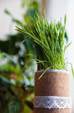 Grönt vårgräs med dagg som en bakgrund royaltyfri foto