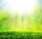 Grönt vårgräs mot naturlig natursuddighet Royaltyfria Bilder