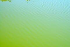 grönt vatten arkivfoto