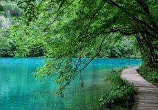 grönt vatten Fotografering för Bildbyråer