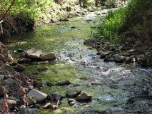 grönt vatten Arkivbilder
