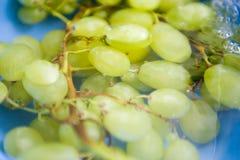 grönt vatten för druvor arkivfoton