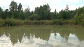 Grönt vatten i sjön Grumligt vatten På sidorna sitt grodor Härlig vit lilja på träd för en sommarsjö reflekterade på krusigt l lager videofilmer