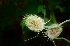 grönt vegetative för bakgrund Arkivfoto