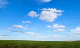 grönt vete för fält Fotografering för Bildbyråer