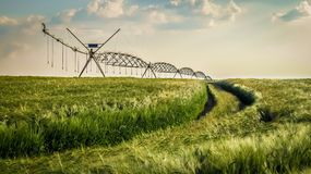 Grönt vetefält med bevattningsystemet arkivfoto