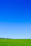 Grönt vetefält och blå himmel. Landskapbakgrund Arkivfoto