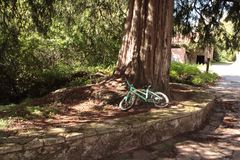 grönt vila för cykel Royaltyfri Fotografi
