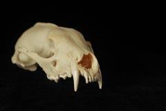 Grúa del animal Imagenes de archivo