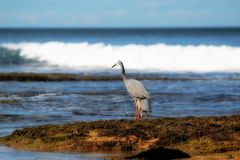 Grúa del mar fotos de archivo libres de regalías