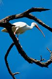 Grúa en árbol fotografía de archivo