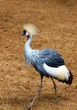 Grúa - grúa coronada Foto de archivo libre de regalías