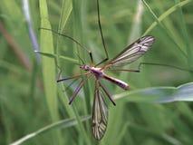 Grúa-mosca imagen de archivo libre de regalías
