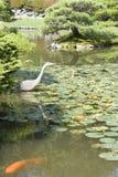Grúa y pescados en jardín japonés Foto de archivo