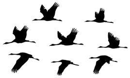 Grúas comunes en las siluetas del vuelo fijadas libre illustration