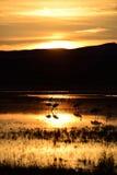 Grúas de la colina de la arena en la puesta del sol Fotografía de archivo libre de regalías