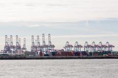 Grúas del transbordo en el puerto marítimo de Hamburgo Fotografía de archivo libre de regalías