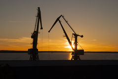 Grúas en la puesta del sol en el lago tarde Imagen de archivo libre de regalías