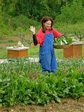 Grüße von den landwirtschaftlichen Frauen mit Korbmangoldgemüse Stockfoto