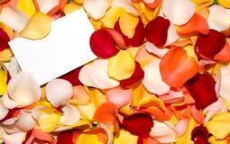 Grüßende Rosen-Blumenblätter Stockfotos