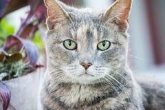 Grünäugige Katze Stockfotografie