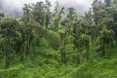 Grün Stockfoto