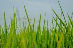 Grün Stockfotografie