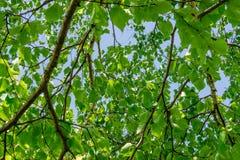 Grün Lizenzfreie Stockbilder