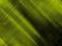 Grün abgetönte CDs Stockbild