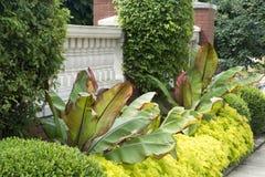Grün arbeiten vor Zaun im Garten stockbild