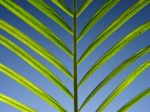 Grün auf Blau Lizenzfreies Stockfoto