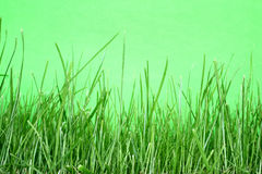 Grün auf Grün Stockfotografie