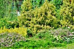 Grün, Bäume und Büsche etwas grüne Abstufungen sind gut stockfoto