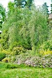 Grün, Bäume und Büsche etwas grüne Abstufungen sind gut stockfotos