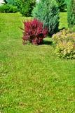Grün, Bäume und Büsche etwas grüne Abstufungen sind gut lizenzfreies stockfoto