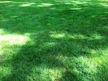 Grün bedecken mit Gras Stockbilder
