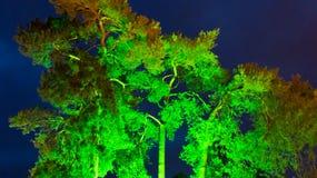 Grün beleuchteter Baum in der Dämmerung Stockfotografie