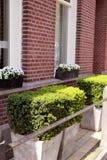 Grün bepflanzt nahe Backsteinmauer mit Büschen Stockfotos