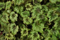 Grün Blätter lizenzfreie stockfotografie