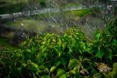 Grün Blätter Lizenzfreie Stockfotos