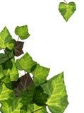 Grün-Blätter Lizenzfreie Stockbilder