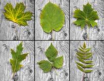 Grün-Blätter lizenzfreies stockfoto